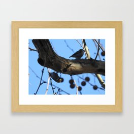 Pair of Nuthatches Framed Art Print