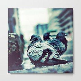 Pidgeons Of 6th Street Metal Print