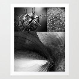 Nigella, Dandelion and Onion Art Print