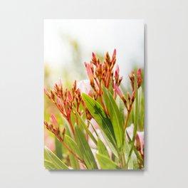 Nature photography Flower bud bloom I Metal Print