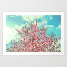 Pink flowers in the early morning Art Print