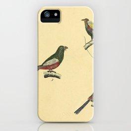 041 paradisea magnifica Superb Bird of paradise trogon curucu Guinea Turaco Common Cuckoo10 iPhone Case