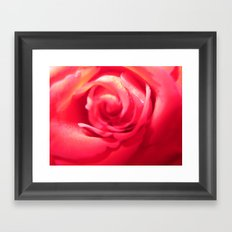 Rose Love Framed Art Print