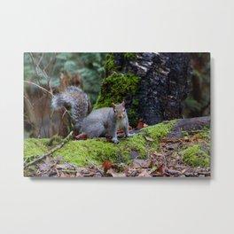 Squirrel2 Metal Print