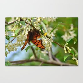 Living On a Tree Canvas Print