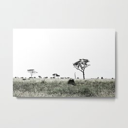South African Trees Collecton Metal Print