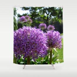 Purple Allium Giganteum Shower Curtain