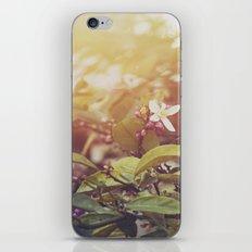 Lemon Flowers iPhone & iPod Skin