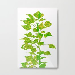 Populus tree in London Metal Print