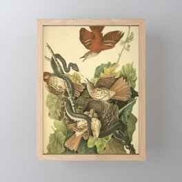 Ferruginous Mocking Bird8 Framed Mini Art Print