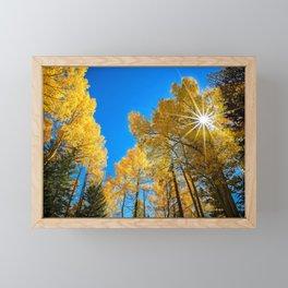 THE AUTUMN SUN COLORADO ASPEN TREE FALL LANDSCAPE  Framed Mini Art Print