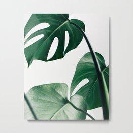 Plant, Green, Monstera, Leaf, Minimal, Trendy decor, Interior, Wall art, Photo Metal Print