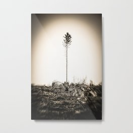 Storm Destroys Forest One Tree Remains Möhne Sauerland sepia Metal Print