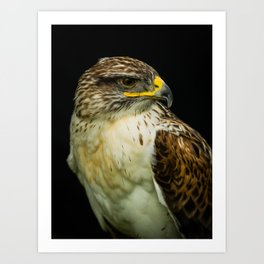 Ferruginous Hawk Art Print