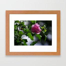 Lil Pink Flower Framed Art Print