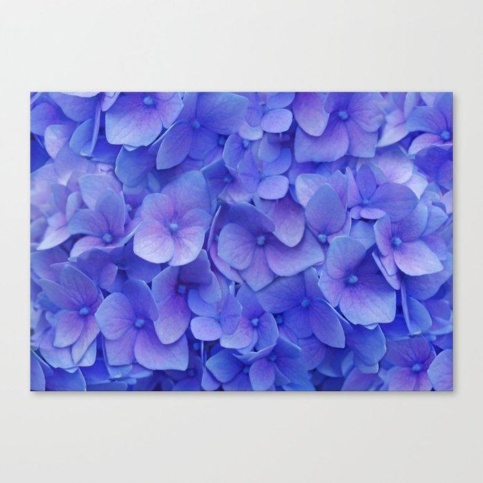 Hydrangea blue Canvas Print