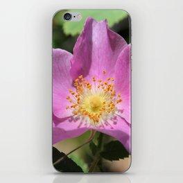 One Wild Rose iPhone Skin
