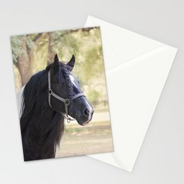 Stunning Gypsy Vanner in Color Stationery Cards