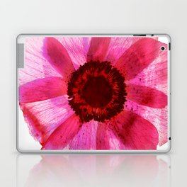 Fragile and beautiful - red anemone in white background Laptop & iPad Skin