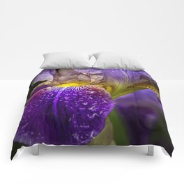 Bearded Iris Comforters