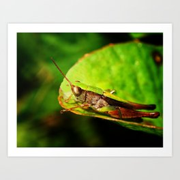 Look Before You Leap Art Print