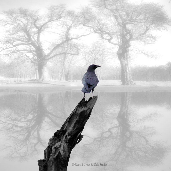 Crow On Misty Pond A114 Comforters