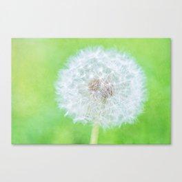 Dandelion - Just Woke Up Beauty Canvas Print