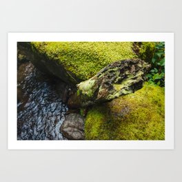 Moss 2 Art Print