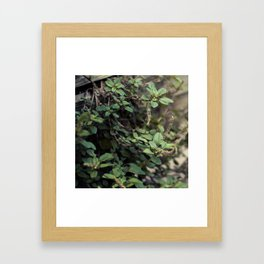 Freedom From Containment Framed Art Print