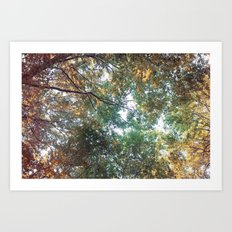 Forest 011 Art Print
