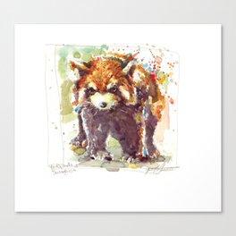 Red Panda / Shinning cat Canvas Print