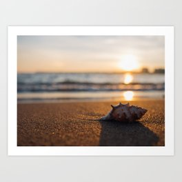 Seashore Seashell Art Print