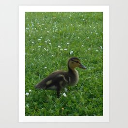 Duckling on the Grass Art Print