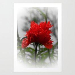 poppy -3- Art Print