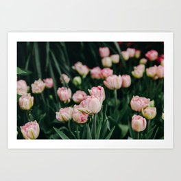 Blush Tulips By The Dozen Art Print