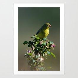 Goldfinch Flower Art Print