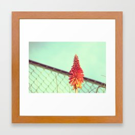 Solitude and Sunshine Framed Art Print