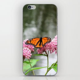 Monarch at Waterford Bend Park 1 iPhone Skin