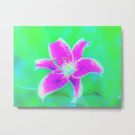 Hot Pink Stargazer Lily on Turquoise Blue and Green Metal Print