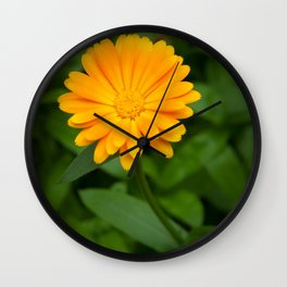 Yellow flower calendula officinalis and green leaves on background Wall Clock