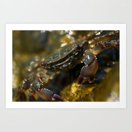 Crab Smiling Art Print