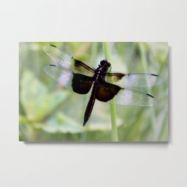 Dragonfly Resting  Metal Print