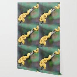 Cesta Rica Yellow poison Snake - Reptiles Wallpaper
