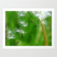 Dandelion Seeds Fly Away Art Print