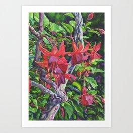 Hanging Fuchsia Art Print