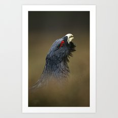 CAPERCAILLIE OUT OF THE HEATHER Art Print