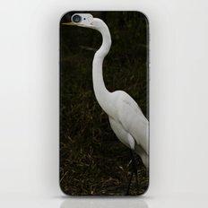 Great Egret iPhone & iPod Skin