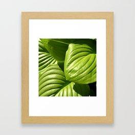 Hosta Framed Art Print