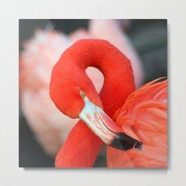 Flamingo20150301 Metal Print