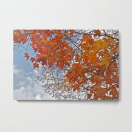 Fall Tree Photography Print Metal Print
